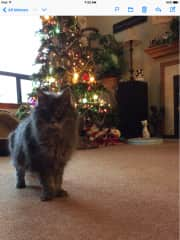 Christmas trees and cats. Never a dull moment.