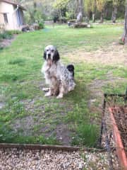 Rupert and Sampson in SW France
