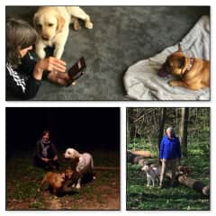 House and pet sitters in Brussels (Belgium). Including night walk when it is to hot.