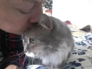 Fogo, the incredible 21 yo Canadian cat