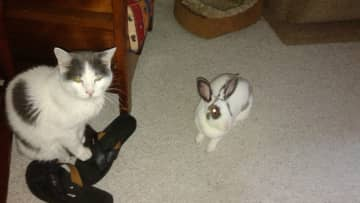 Henri, our cat and Emma, the house  rabbit
