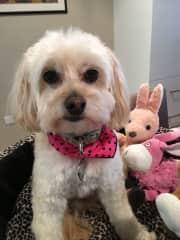 Roxy loves her toys