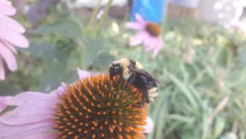 We've landscaped with thousands of native plants to attract beauties like this girl