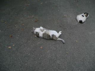 Vanille & Chat blanc
