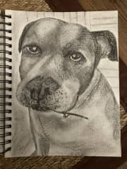My rendition of Edith. She is a sweet old pitbull mix.