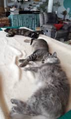 Three of our four cats sleep on the pool table! :-)