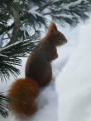 Or local wildlife. Red squirrels are the best!