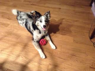 Nova loves to play ball.