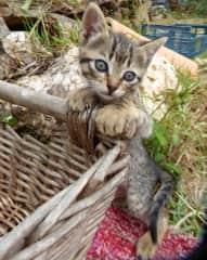 Baby boy cat