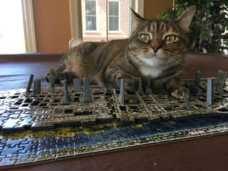 Azrael loves to help you build puzzles