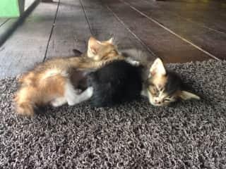 Kittens at the animal sanctuary I volunteered at on Tioman Island, Malaysia.