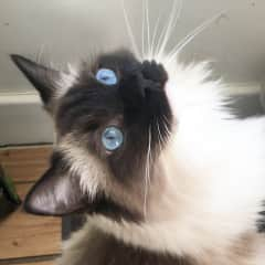 Francois showing off his beautiful eyes
