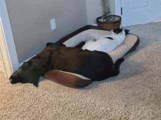She always gives him more room