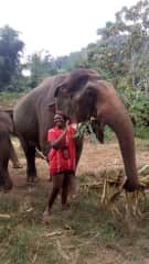 Volunteering with Elephants in Thailand (no rididng)