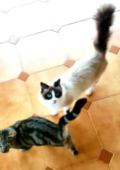 Princess Kiki and her kitten, our feral neighborhood kitties we loved up while in Spain