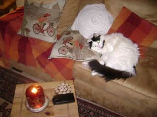 Ollie - 16 years old, he is a rescue cat from Qatar.