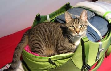 Chorri helping me pack...