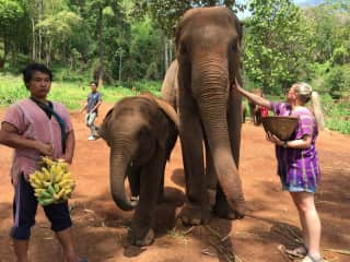 Trip to Thailand to explore ethical elephant rescues!