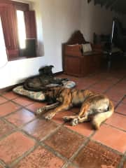 Esperanza and Chewy