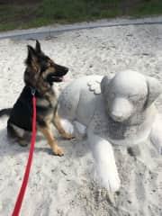 Ziggy appreciating some art