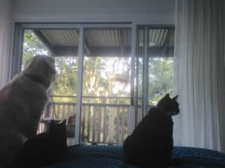 Birdwatching from main bedroom.