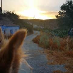 Sorbas, Spain with Otis and the evening walk. (Otis y su paseo por la noche)