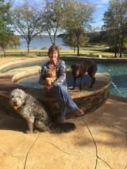 Four great dogs in Dallas petsit