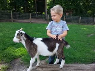 taking my nephew to a wild zoo