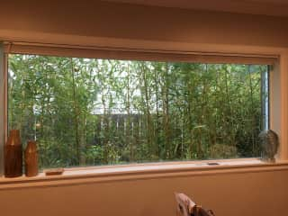 We have a lot of large windows and outdoor bamboo plants.