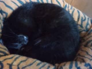Clarence sleeping