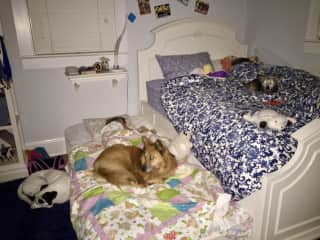 All the girls sleeping together:  our two kids, our dog Pippy on the floor, and the two dogs we are taking care of on the beds.