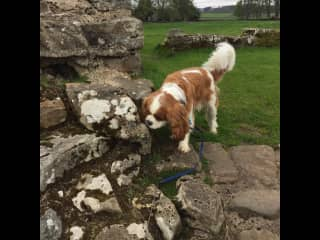 This is Alfie, if I was to get a dog for myself it would be a King Charles Cavalier, I loved looking after him and the two Queens of the household, cats Gracie and Rosie.  I got to many lovely hikes in the Lakes District with Alfie.