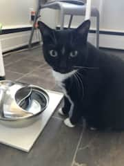 So happy she likes her new water fountain - you never know how that will go with a cat!