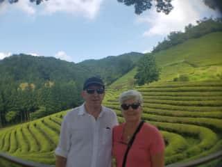 Korean Tea Plantation - 2017