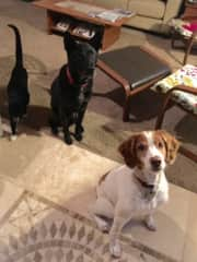 Sherwood,OR.  Pet sit- Charlie,Bessie and Emitt waiting for treats! 2017