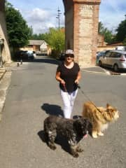 Off for a walk in Albi France 🐾🐾