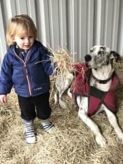 Our grandson and our Great Dane Suki, staying warm in the hay.