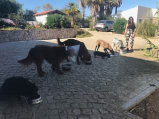 Dinner time again - housesit in southern Portugal forthesummer of 2019