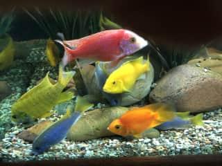 My beautiful, relaxing, low maintenance fishies