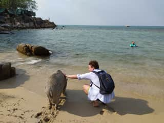 Making animal friends everywhere we go. Who knew pigs lived at the beach?