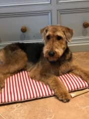 Another picture of Millie just relaxing on her mat.