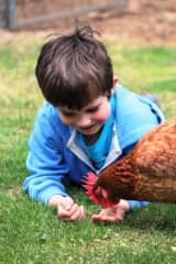 Noah with Clucky