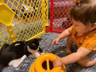 AJ and Bobcat playing