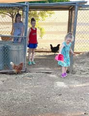 We love taking care of chickens!!
