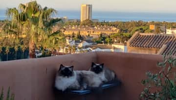 Prince & Sahara loves to sit on the terrace watching birds!