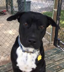 Another shelter dog that I walked