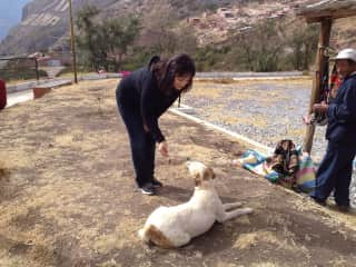 Jenny will find and be kind to any strays like these near Peru Bolivia Border..