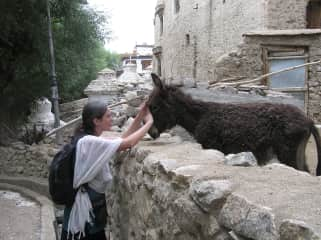 Giving Reiki to a donkey in India.