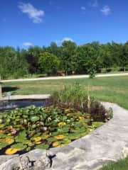 A little lily pond at the front of the house