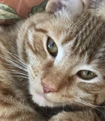 Elmo is named after St. Elmo, the patron saint of sailors. He is an avid hunter of small animals, and is very loving